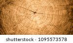closeup macro view of end cut... | Shutterstock . vector #1095573578