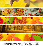 set of 5 different autumn's... | Shutterstock . vector #109563656