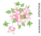 bougainvillea  flower isolated... | Shutterstock .eps vector #1095676436