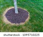 area around a tree trunk... | Shutterstock . vector #1095710225