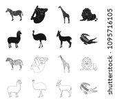 lama  ostrich emu  young... | Shutterstock .eps vector #1095716105