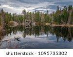 algonquin park marsh   Shutterstock . vector #1095735302
