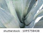 palm springs  california  ... | Shutterstock . vector #1095758438