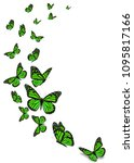 beautiful green monarch... | Shutterstock . vector #1095817166