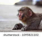 monkey forest  japan   Shutterstock . vector #1095821102