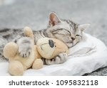 Stock photo cute kitten sleeping with toy bear 1095832118