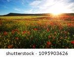 spring flowers in field.... | Shutterstock . vector #1095903626