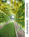 dunedin  otago new zealand...   Shutterstock . vector #1095916292