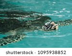 sea turtle conservation center... | Shutterstock . vector #1095938852
