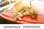 cat rest on car roof | Shutterstock . vector #1095940322
