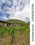 vineyard in liechtenstein.... | Shutterstock . vector #1096001996