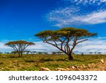 african landscape dotted with... | Shutterstock . vector #1096043372
