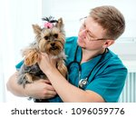 veterinarian holding dog on... | Shutterstock . vector #1096059776