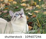 cat on a green grass and looks... | Shutterstock . vector #109607246