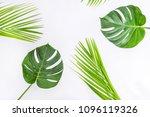 two monsterawith leaves of palm ... | Shutterstock . vector #1096119326