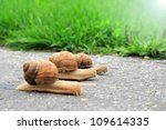 Stock photo snail run 109614335