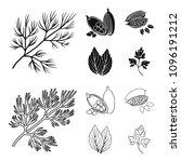 dill  cocoa beans  basil.herbs... | Shutterstock .eps vector #1096191212