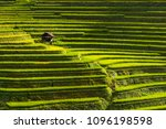 beautiful landscape of rice... | Shutterstock . vector #1096198598