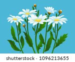 camomiles vector illustration.... | Shutterstock .eps vector #1096213655