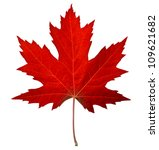 Red maple leaf as an autumn...