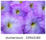 Art Painting Of Purple Petunia...