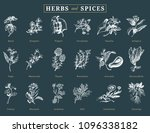 drawn herbs and spices vector... | Shutterstock .eps vector #1096338182