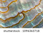 close up photograph of... | Shutterstock . vector #1096363718