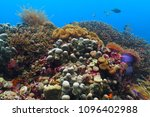 colorful tropical underwater... | Shutterstock . vector #1096402988