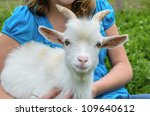 White Pygmy Goat With Owner