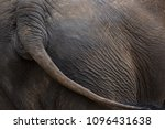 Elephant Wagging Tail