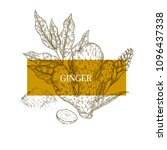 hand drawn ginger root and... | Shutterstock .eps vector #1096437338