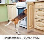 the dog in kitchen searches for ... | Shutterstock . vector #109644932