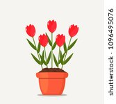 red tulips in a pot of earth.... | Shutterstock .eps vector #1096495076