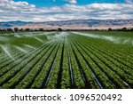 A field irrigation sprinkler system waters rows of lettuce crops on farmland in the Salinas Valley of central California, in Monterey County, on a partly cloudy day in spring.