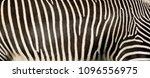 Texture Of Fur  Wool Zebra....