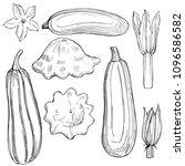 hand drawn zucchini  and squash ...   Shutterstock .eps vector #1096586582