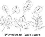 acer,ash,autumn,birch,bough,branch,buckeye,cherry,chestnut,drawing,foliage,greenery,illustration,leaf,maple