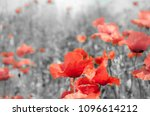 The Remembrance Poppy Was...