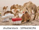 camels of a salt caravan at the ... | Shutterstock . vector #1096636196