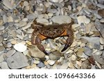 crab on a stony beach close up | Shutterstock . vector #1096643366