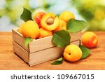 Ripe Apricots With Leaves In...