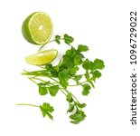 bundle of cilantro isolated on... | Shutterstock . vector #1096729022