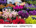 Flowers For Sale At A Dutch...