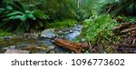 otways rainforest  vic ... | Shutterstock . vector #1096773602