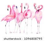 watercolor flamingos. hand... | Shutterstock . vector #1096808795