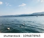 wildlife and nature of... | Shutterstock . vector #1096878965