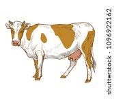 milk cow animal ink sketch hand ... | Shutterstock .eps vector #1096922162