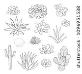 succulent cactus collection.... | Shutterstock .eps vector #1096951538