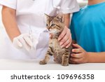 Stock photo little kitten at the veterinary getting a vaccine 109696358