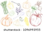 vegetables drawn illustration ... | Shutterstock . vector #1096993955